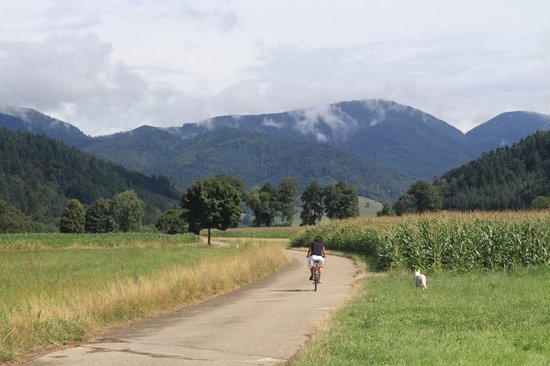 Campingplatz Muenstertal : Cycling in the valley