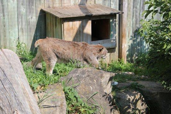 Zoo Ecomuseum: Ecomuseum