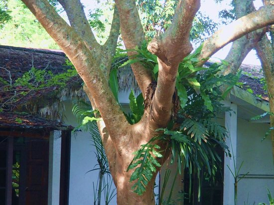 Green Village Langkawi : Huge green shady trees