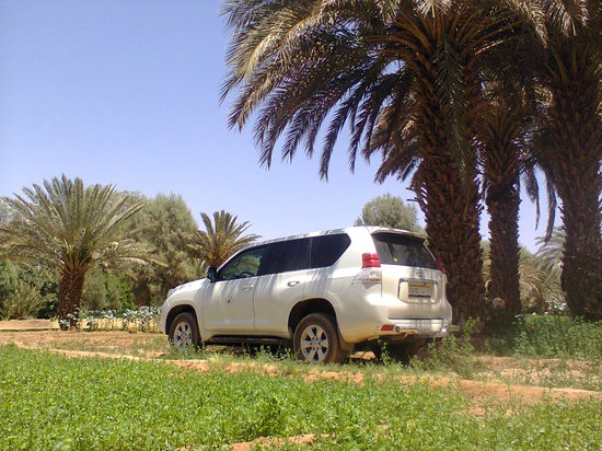 Tours Of Peace & Morocco Holidays - Day Tours: our 4x4 in a Oasis while on a picnic lunch