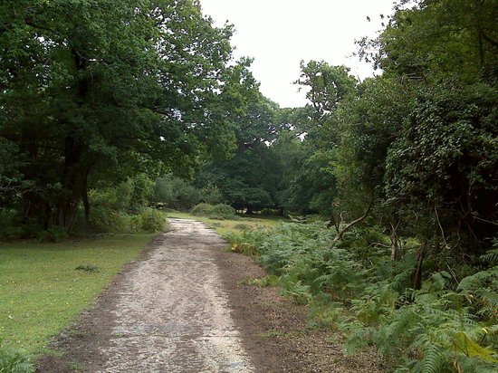 Ocknell and Longbeech Campsites: New forest Ocknell area