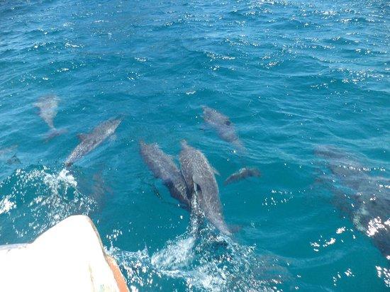 Fernando de Noronha Memorial: M A R A V I L H O S O    com os golfinhos a frente do barco.