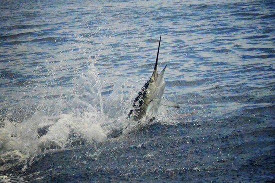 Casa del Sur Fishing: Exciting Fishing adventure!