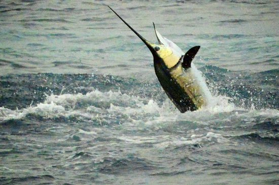 Casa del Sur Fishing: Come catch and Release YOUR first Pacific Sail!