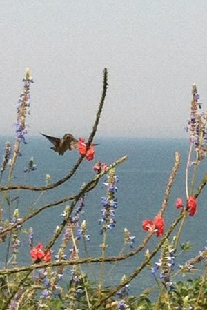 Baiting Hollow Hummingbird Sanctuary: Hummingbirds everywhere
