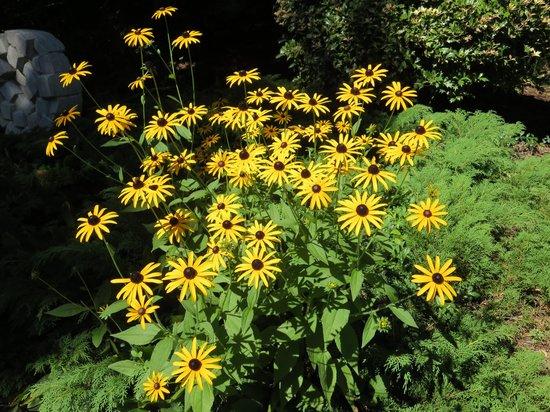 LongHouse Reserve: Flowers in Garden
