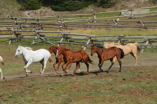Brooks Lake Lodge and Spa: Turning out of the horses