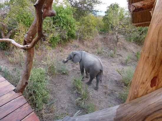 Liwonde Safari Camp: Elephants at platform 1