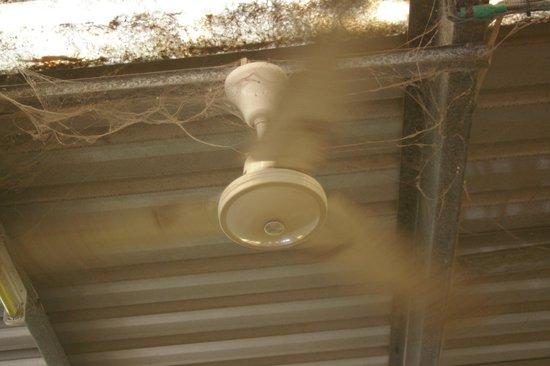 BIG4 Howard Springs Holiday Park : cobwebs in Ladie's toilet