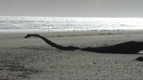 Port Waikato Holiday Park: Port-Ness Monster - Godwits(Birds) looking on