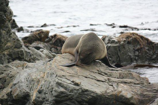 Seal Coast Safari : At the sea lion colony