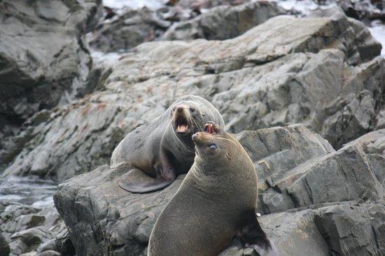 Seal Coast Safari : Sea lions