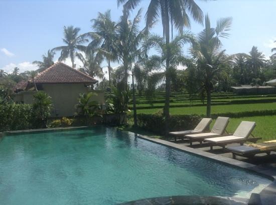 Bhanuswari Resort & Spa: large pool
