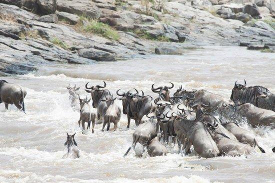 Kicheche Bush Camp: Crossing!