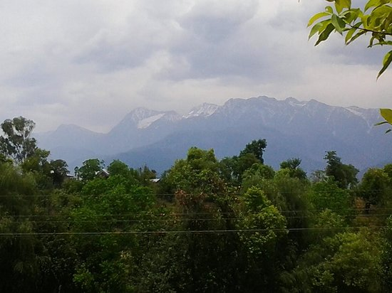 The Tea Bud: View of Mighty Dhauladhar