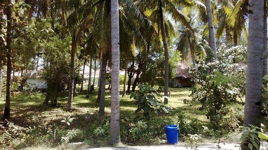 Gili Air Resort: il palmeto