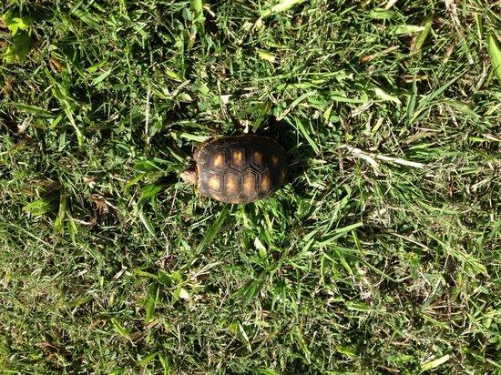 The Cotton House: Hotell sköldpadda