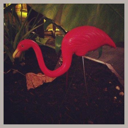 Coco's Bar & Grill: flamingo!