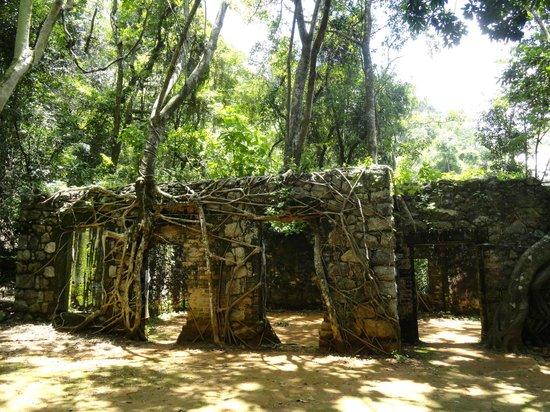 Cascata das Antas : árvores nas ruínas