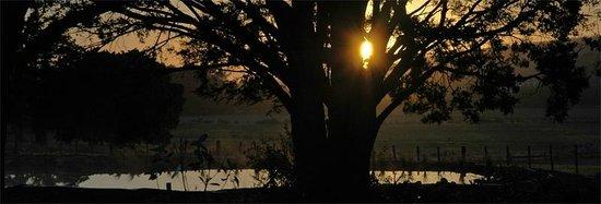 Hoeke Lodge: The Pond at sunrise