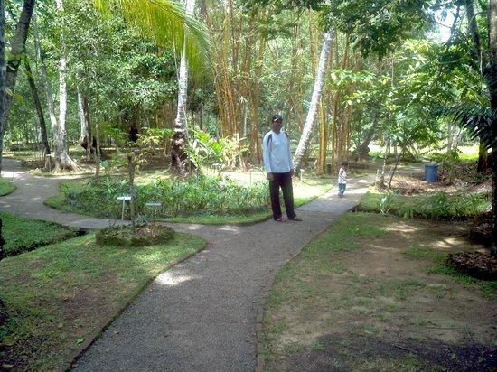 Herbal Garden - Picture of Dalmanuta Gardens - Ayurvedic Resort ...