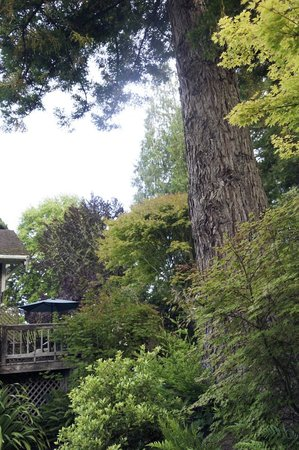 Inverness Secret Garden Cottage : This is one of my favorite trees