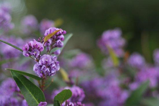 Arreglo de flores de invierno - HIGH SIERRA GARDENS, Incline Village NV