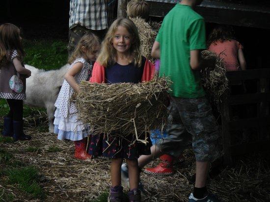Polean Farm Cottages: feeding the animals