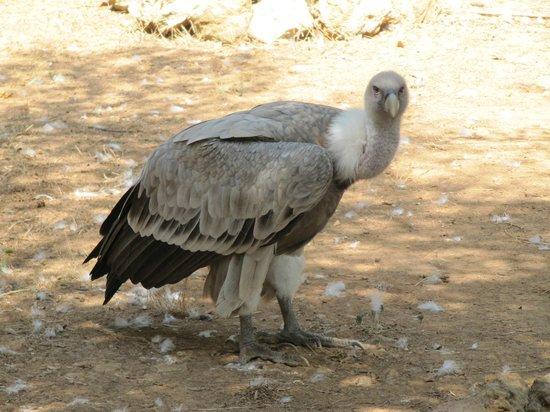 Zoo Natura Parc: .