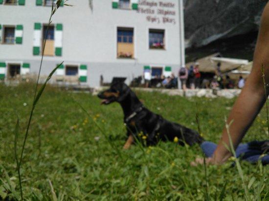 Rifugio Stella Alpina : La mia bassotta