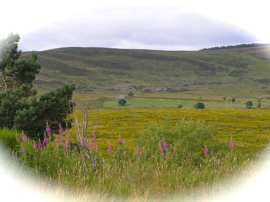 Greenlawns: Highland Tourist Route from Nairn to Grantown-on-Spey