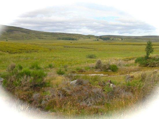 Greenlawns : Highland Tourist Route