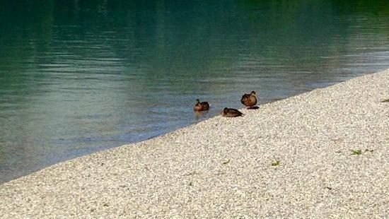 Valle di Ledro : Lago