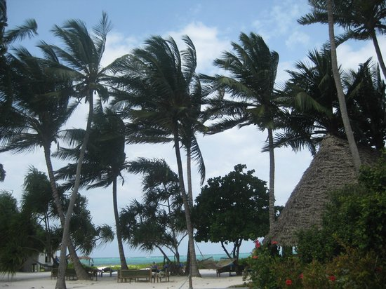 Mchanga Beach Resort: Coconut Palms in the Wind