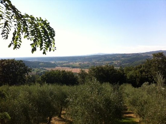 Agriturismo Fattoria La Prugnola: panorama da La Locanda