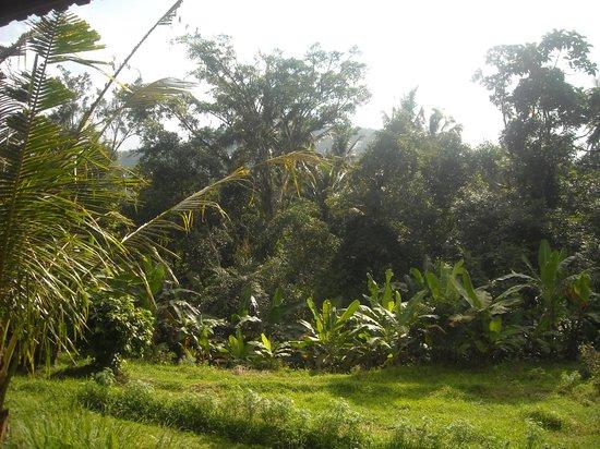 Khrisna Homestay : garden view