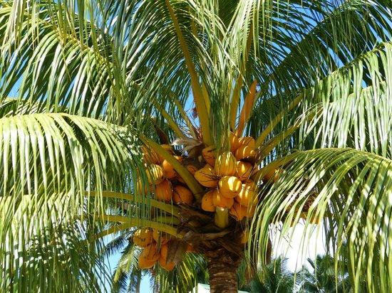 Chalets d'Anse Forbans : Les cocotiers
