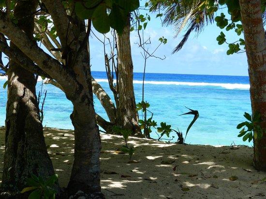 Chalets d'Anse Forbans: La bord de plage vue du chalet