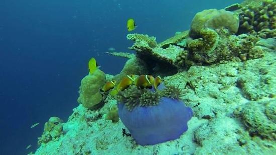 uitverkoop super goedkoop ophalen snorkeling on the house reef - Picture of Ellaidhoo Maldives ...