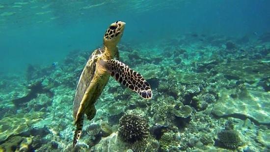 hoge kwaliteit op voet schoten van best cool snorkeling on house reef - Picture of Ellaidhoo Maldives by ...