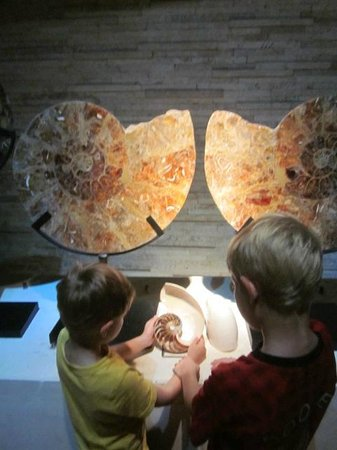 Bali Shell Museum: exploring the fossils