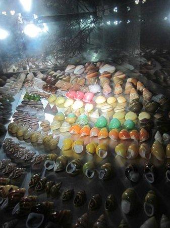 Bali Shell Museum: rainbow of shells