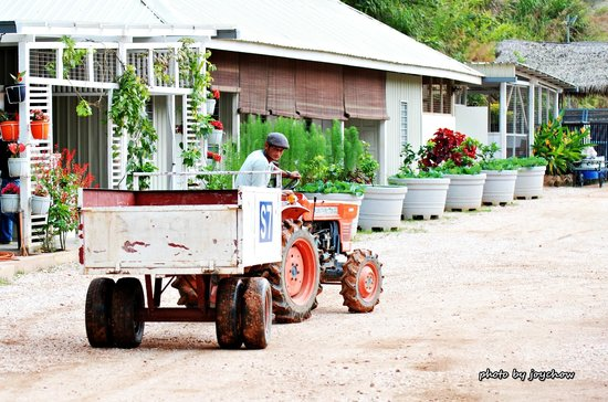 Moonriver Lodge: The tractor at the guesthouse