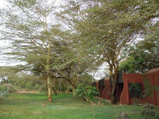 Amboseli Serena Safari Lodge: hotel grounds