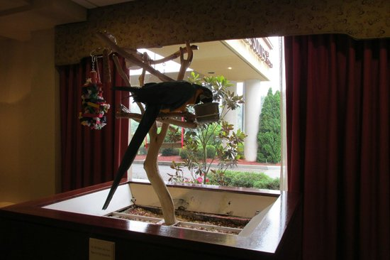 Doubletree Suites by Hilton Hotel Cincinnati - Blue Ash: Lobby Mascot