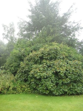 Wester Dura B&B: view of garden