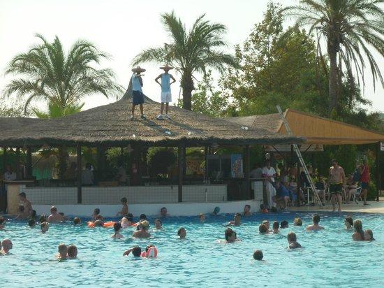 Club Hotel Felicia Village: les animations à la piscine