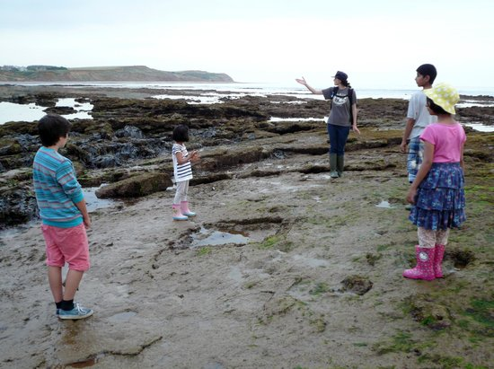 Isle of Wight Fossil Hunts - Island Gems: Flick in action
