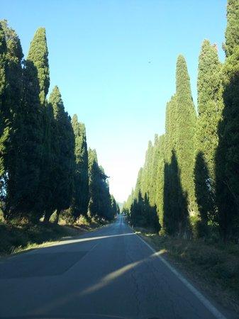 L'Uva Nera: cipressetti cipressetti miei