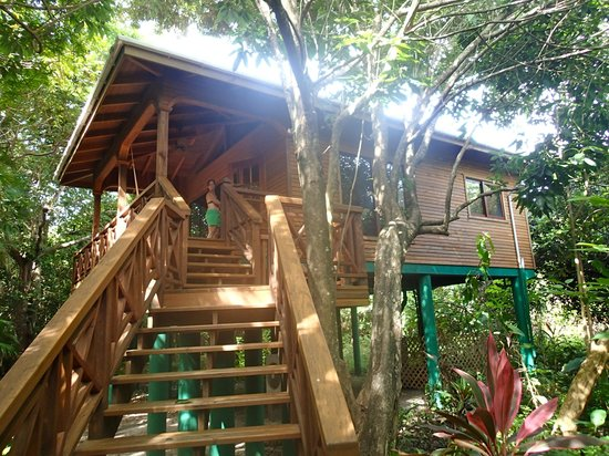 Hamanasi Adventure and Dive Resort: Deluxe Tree House
